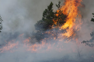 Photo of a forest fire or wildfire