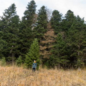 Photo of woman surveying field at the edge of a stand of trees