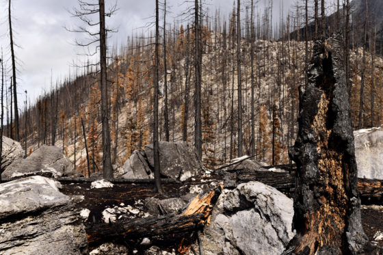Photo of burnt trees on rocky mountainside