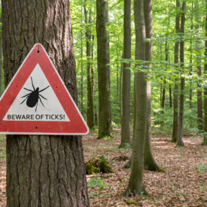 Photo of a forest with a sign saying Beware of ticks!