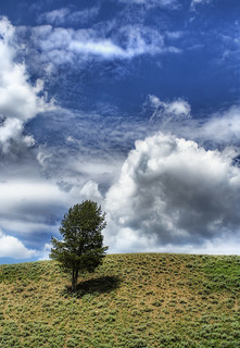 Photo of a lone tree on a hill