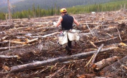 Image from BC SAFE Silviculture Program's Footing and Footwear Report