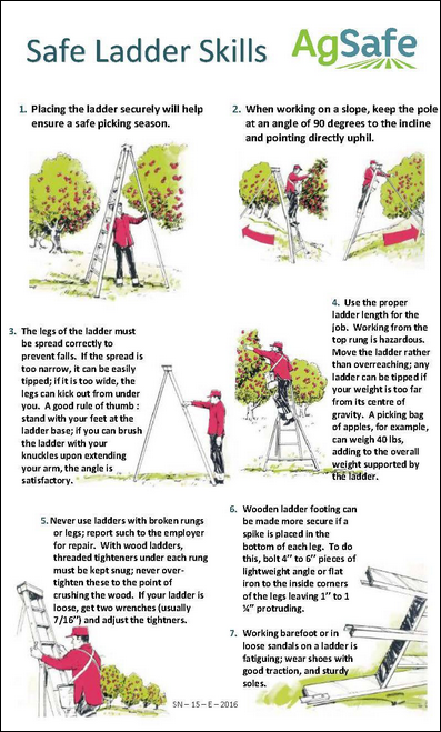 Poster with drawings showing safe use of orchard ladders
