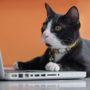 Photo of black-and-white cat working at a laptop