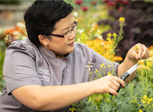 Photo of Isabel Chung snipping yellow flowers from green kale