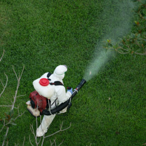 Photo of worker wearing white kevlar suit and respirator spraying pesticide onto shrub