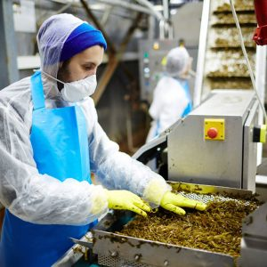 Photo of worker wearing PPE in seaweed salad processing facility.