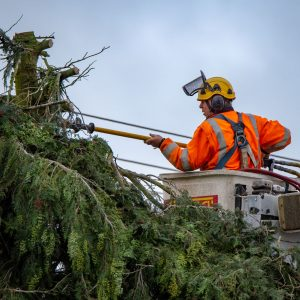 Photo of an arborist pruning trees from a hoisted bucket near high-voltage powerlines