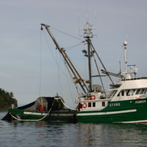 Photo of a seine fishing boat in the water.
